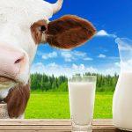 Молоко, согласно трактатам Аюрведы